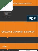 Organos Genitales Externos