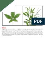 Botany.docx