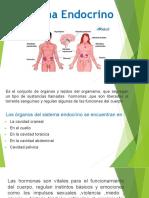 Sistema Endocrino.pdf23