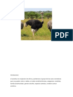 monografia avestruz.docx