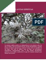 INTA- Flora Piedemonte Cap 4 y 5
