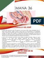 SEMANA 36