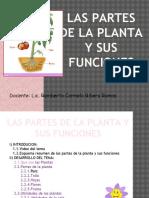 Las Plantas y Sus Funciones
