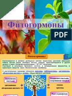 Фитогормоны
