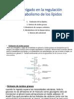 Rol Del Hígado en La Regulación Del Metabolismo