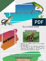 Anfibios Reptiles