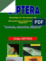 13 Diptera