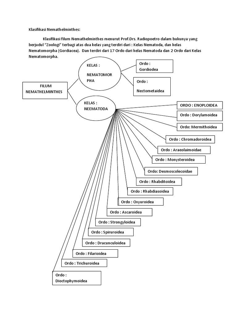 Kelas dalam filum nemathelminthes, Klassifikasi hewan nemathelminthes - Ciri hewan nemathelminthes