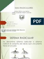 Tipos y Sistemas Radiculares