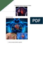 Sistema Cardiopulmonar