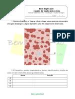 A.4.1 - Constituição e Funções Do Sangue - Ficha de Trabalho (1)