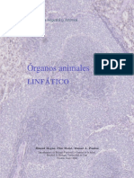 Circulación Linfatica