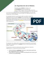 Niveles de Organización de la Materia.docx
