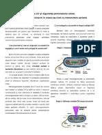 Lampile UV si siguranta personalului uman.pdf