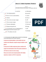 Photosynthesis & respiration worksheet_Key.doc