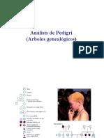 pedigri.pdf