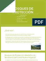 """Bosques de Proteccíon / 4° """"B""""/  IEP Tte. Miguel Cortes - Sullana"""