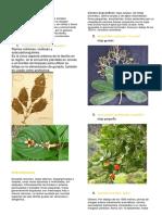 granada. dendro I.pdf