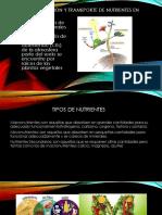 Incorporacion y Tramsporte de Nutrientes en Plaantas