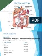 Sistema Digestivo Diapositivas