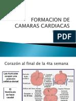 Formacion de Camaras Cardiacas
