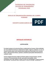 Clase 3- Organización Seres Vivos (Tejido-Organos-sistemas)