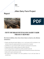 Fifty Murrah Buffaloes Dairy Farm Project Report