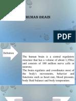 bu tika Human Brain.pptx