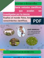 SUSTANCIAS DE EXCRECION.pptx