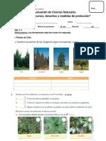 Evaluación de Ciencias Naturales (Plantas-recursos-medidas)