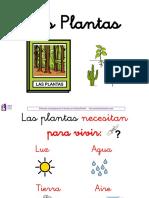Las Plantas 1º Primaria