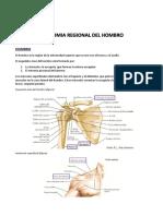 Anatomia Regional Del Hombro