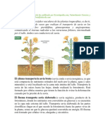 fisiologia vegetal. xilema y floema