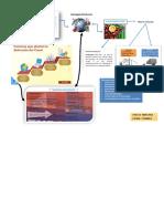 Evidencia 3 Infografias Estrategia Global de Distribucion