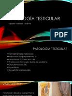 Patología Testicular y Peneana