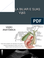 Vias Biliares3