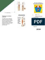 51501686-Triptico Ssitema Endocrino
