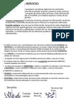 SISTEMA NERVIOSO 12-09-2019.pptx