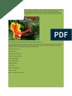 Klasifikasi Dan Morfologi Bunga Merak