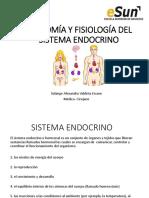 2 Anatomía Sistema Endocrino