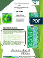 Que Es El Xilema (1) [Autoguardado]