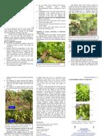 Leaf Sampling Guide for Grapevines