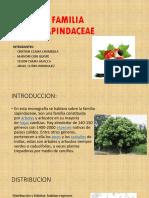 Familia Sapindaceae
