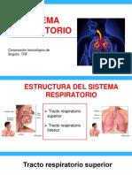 Morfofisiologia del sistema respiratorio