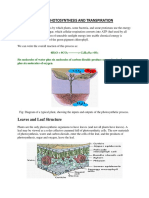 Photosynthesis And Transpiration.pdf