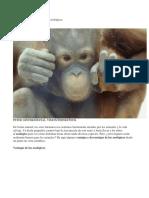 Las Ventajas y Desventajas de Los Zoológicos