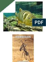 Morteros y Hormigones 2° parte.pdf