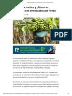 Cultivos de Plátano Son Amenazados Por Hongo _ Analitica.com
