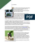 Guía de cultivo del Marihuana.docx