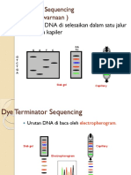 Dye Terminator Sequencing